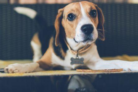 rešilne kapljice za živali